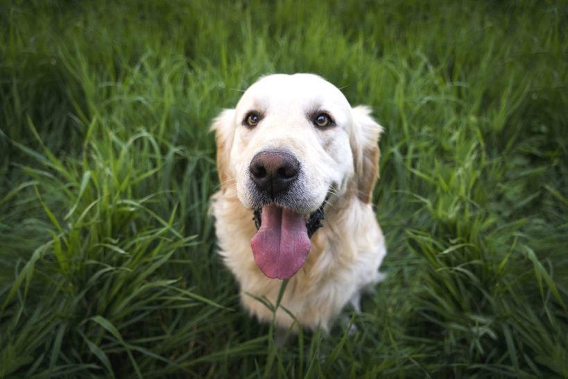 Hundekotbeutel Gassibeutel plastikfrei